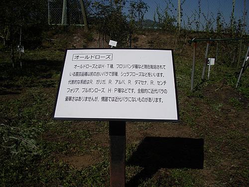 IMGP7154.jpg